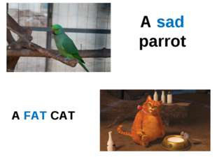 A FAT CAT A sad parrot