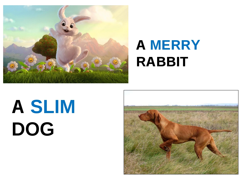 A MERRY RABBIT A SLIM DOG