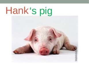 Hank 's pig