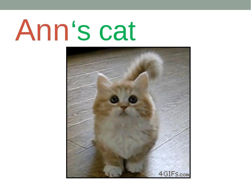 Ann 's cat