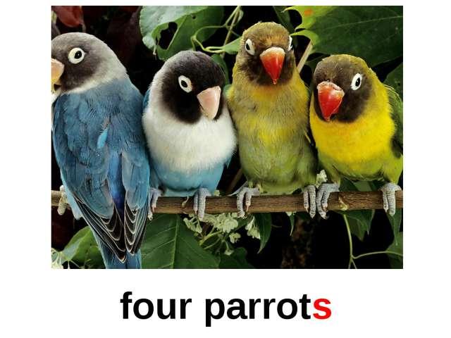 four parrots