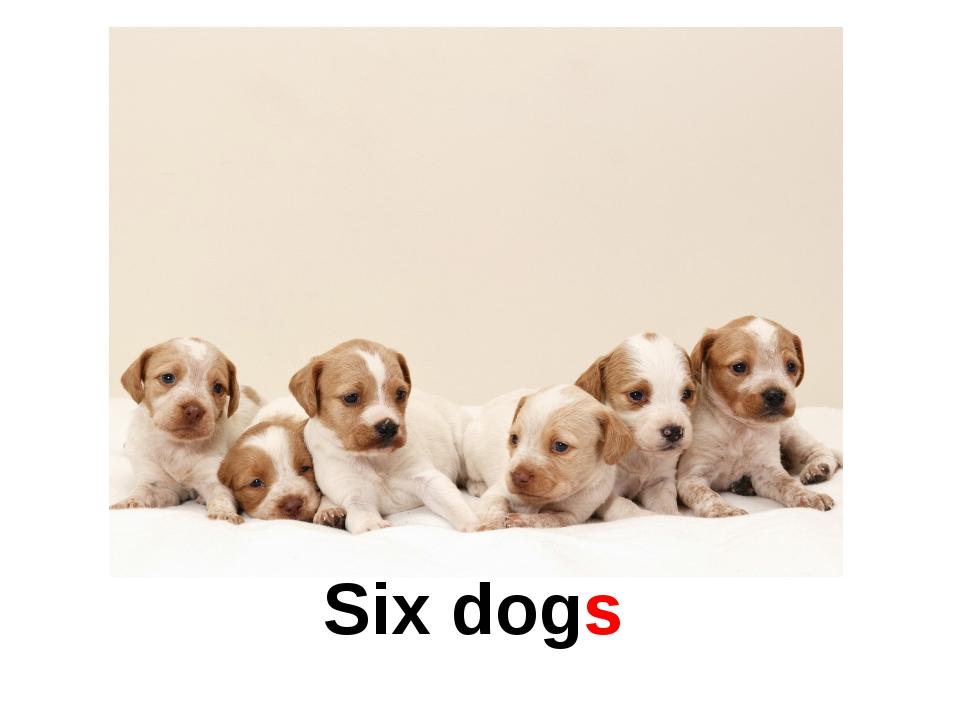 Six dogs