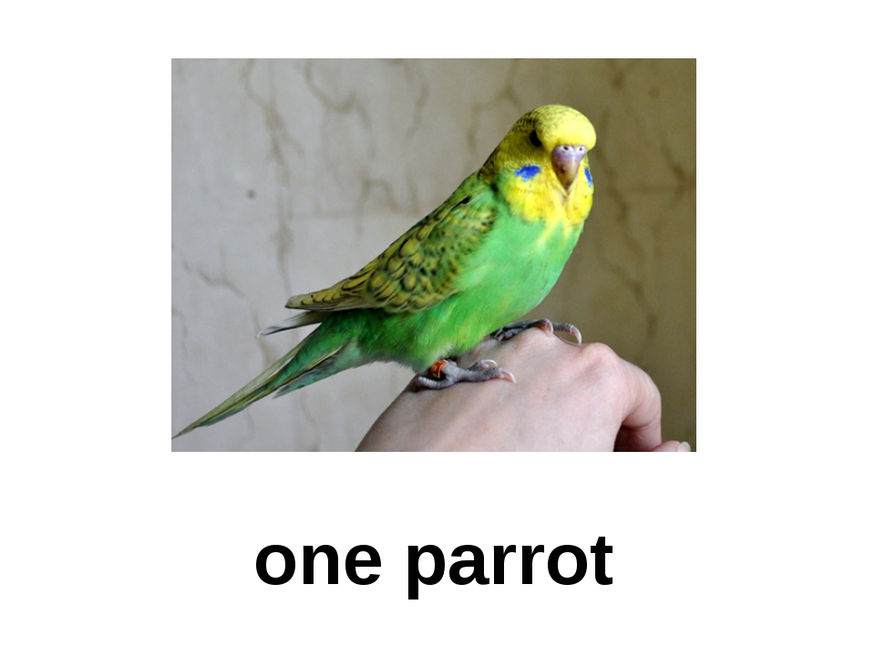 one parrot