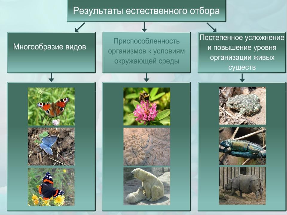естественный отбор с картинками