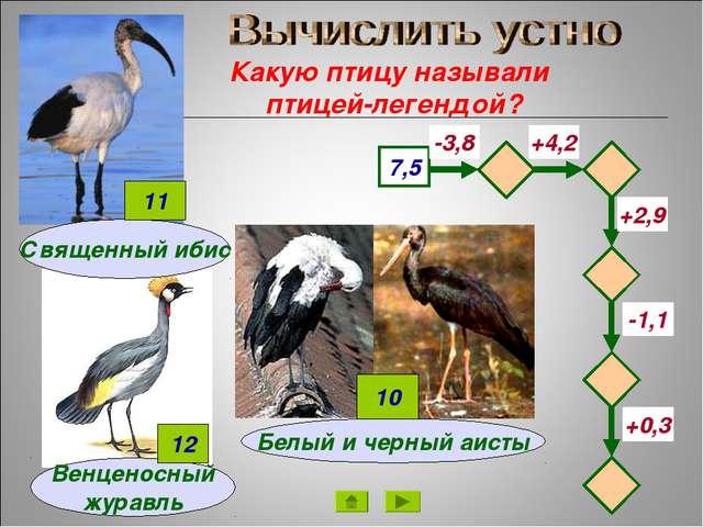 Какую птицу называли птицей-легендой? Венценосный журавль 7,5 -3,8 +4,2 -1,1...