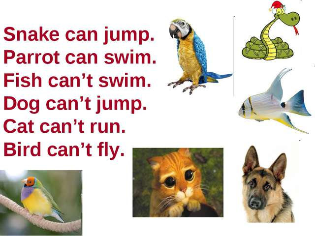 Snake can jump. Parrot can swim. Fish can't swim. Dog can't jump. Cat can't r...