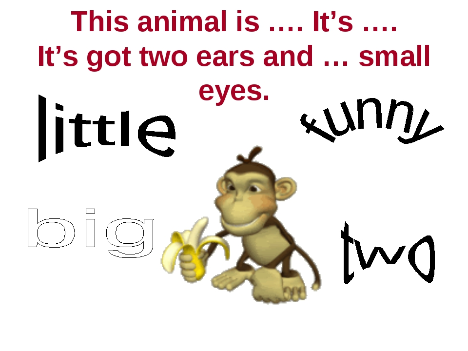 This animal is …. It's …. It's got two ears and … small eyes.