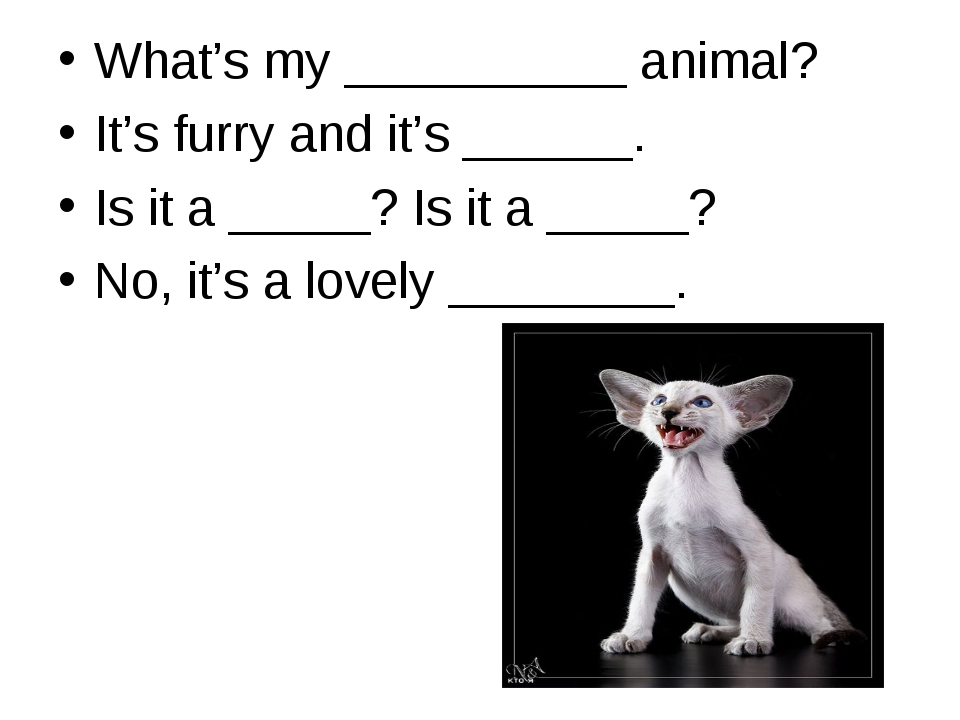 What's my __________ animal? It's furry and it's ______. Is it a _____? Is it...