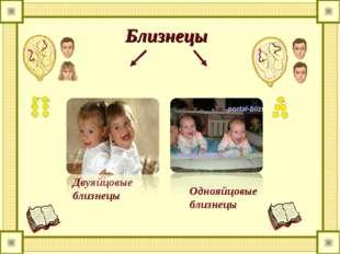 Близнецы Двуяйцовые близнецы Однояйцовые близнецы