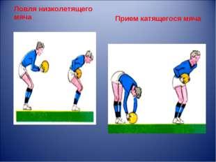 Ловля низколетящего мяча Прием катящегося мяча