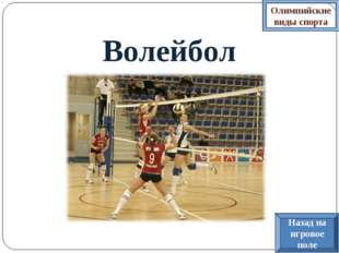 Волейбол Олимпийские виды спорта Назад на игровое поле