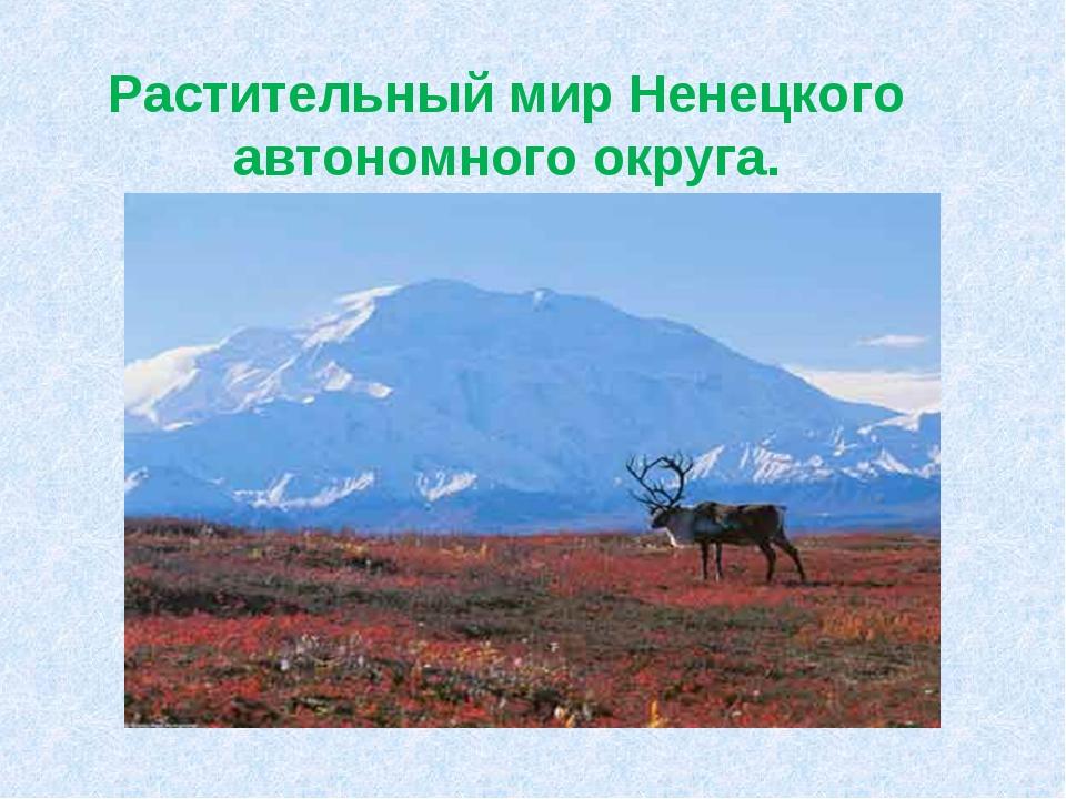 Растительный мир Ненецкого автономного округа.