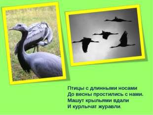 Птицы с длинными носами До весны простились с нами. Машут крыльями вдали И ку