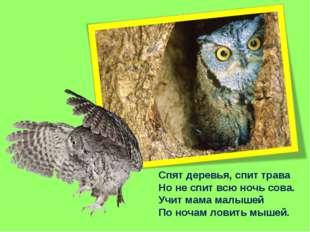 Спят деревья, спит трава Но не спит всю ночь сова. Учит мама малышей По ночам