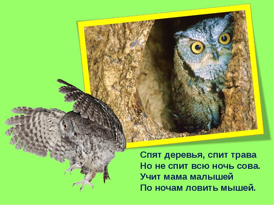 Спят деревья, спит трава Но не спит всю ночь сова. Учит мама малышей По ночам...