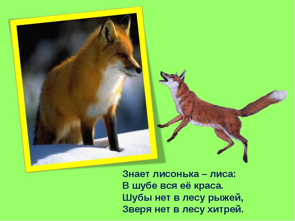 Знает лисонька – лиса: В шубе вся её краса. Шубы нет в лесу рыжей, Зверя нет...