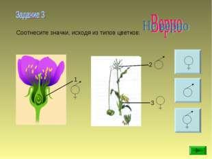 Соотнесите значки, исходя из типов цветков: