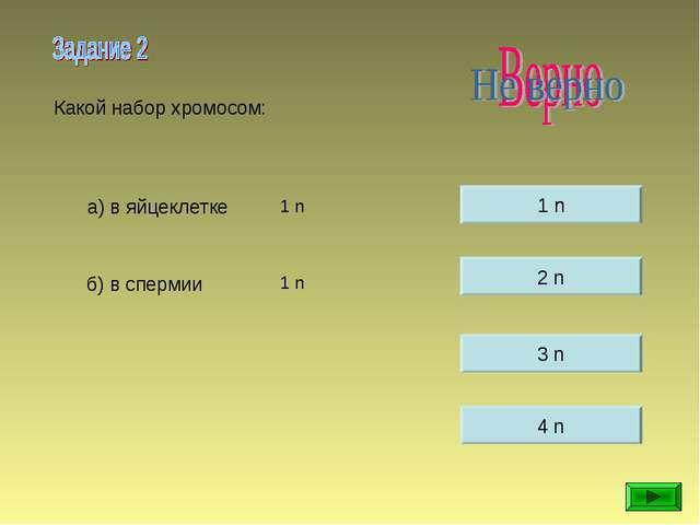 1 n 2 n 3 n 4 n Какой набор хромосом: а) в яйцеклетке б) в спермии 1 n 1 n 1 n