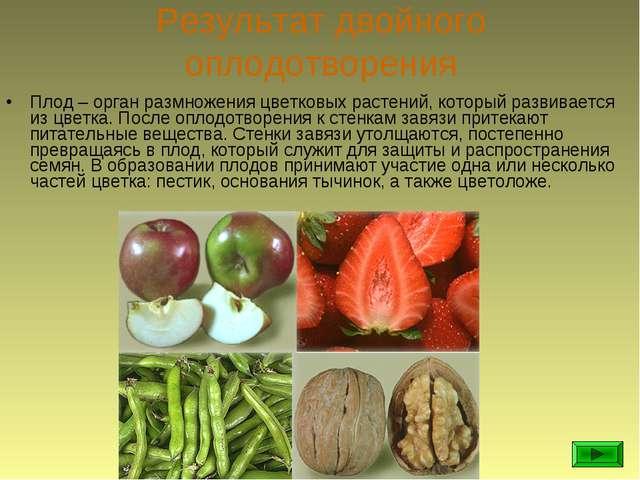 Результат двойного оплодотворения Плод – орган размножения цветковых растений...