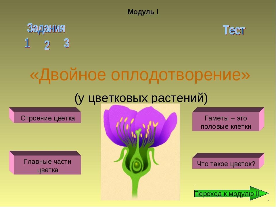 «Двойное оплодотворение» (у цветковых растений) Модуль I Строение цветка Глав...