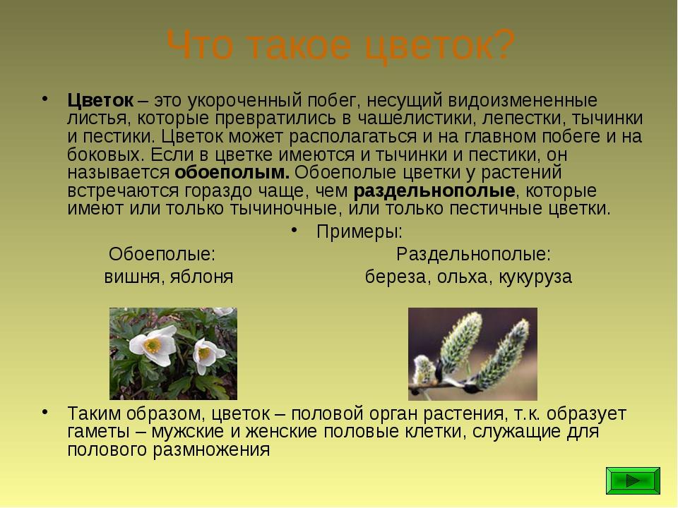 Что такое цветок? Цветок – это укороченный побег, несущий видоизмененные лист...