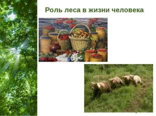 Роль леса в жизни человека Free Powerpoint Templates Page *