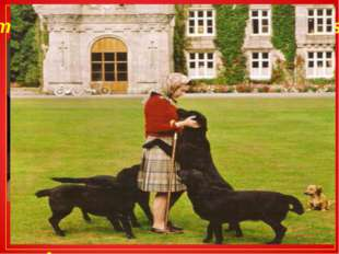 Some interesting facts about the Queen`s life She likes dogs