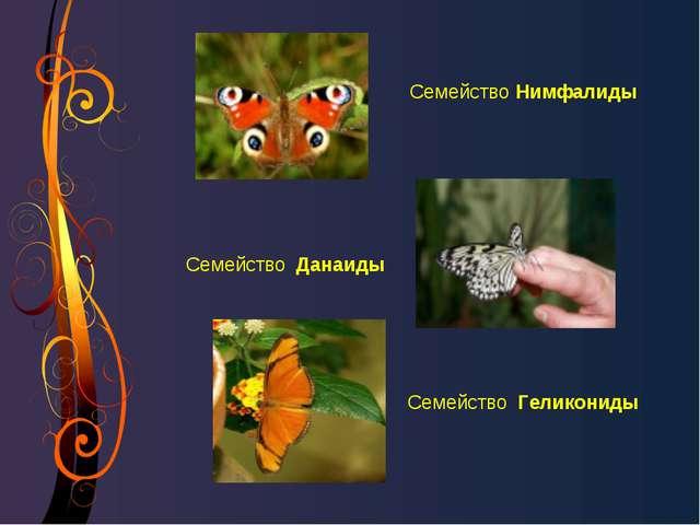 СемействоНимфалиды Семейство Данаиды Семейство Геликониды