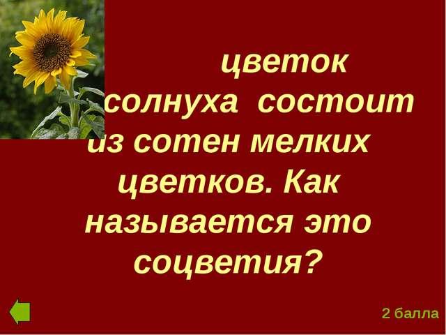 цветок подсолнуха состоит из сотен мелких цветков. Как называется это соцвет...
