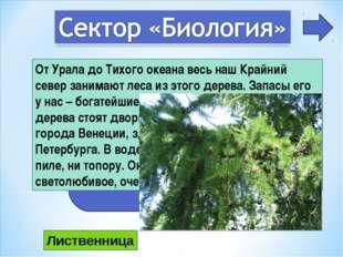 5 От Урала до Тихого океана весь наш Крайний север занимают леса из этого дер