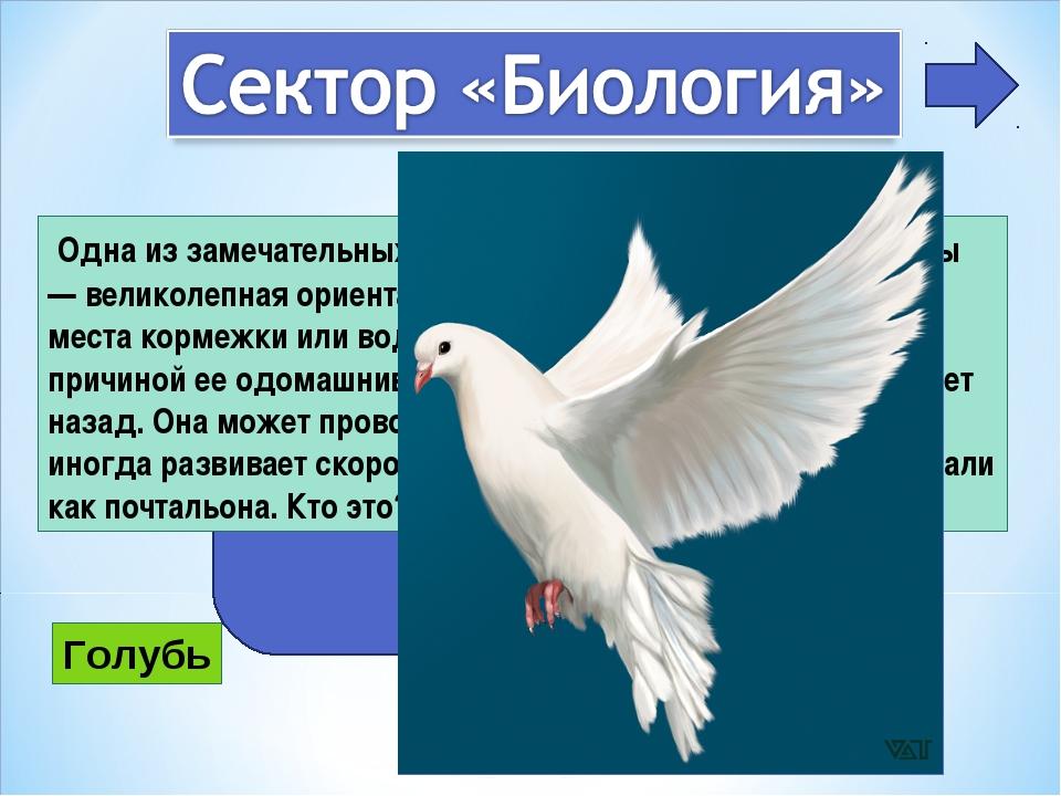 2 Одна из замечательных особенностей поведения этой птицы — великолепная ори...