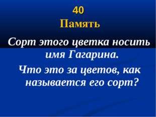 40 Память Сорт этого цветка носить имя Гагарина. Что это за цветов, как назыв