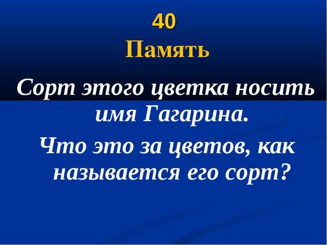 40 Память Сорт этого цветка носить имя Гагарина. Что это за цветов, как назыв...
