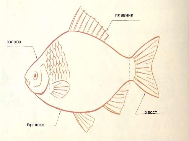 голова плавник хвост брюшко
