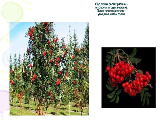 Под окном растет рябина – в красных ягодах вершина. Прилетели свиристели – уг...