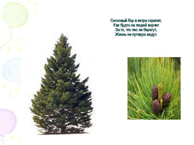 Сосновый бор в ветра скрипит, Как будто на людей ворчит За то, что лес не бер...