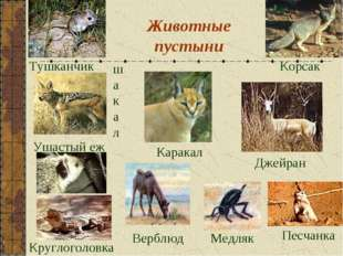 Животные пустыни Каракал Тушканчик Корсак шакал Круглоголовка Джейран Медляк