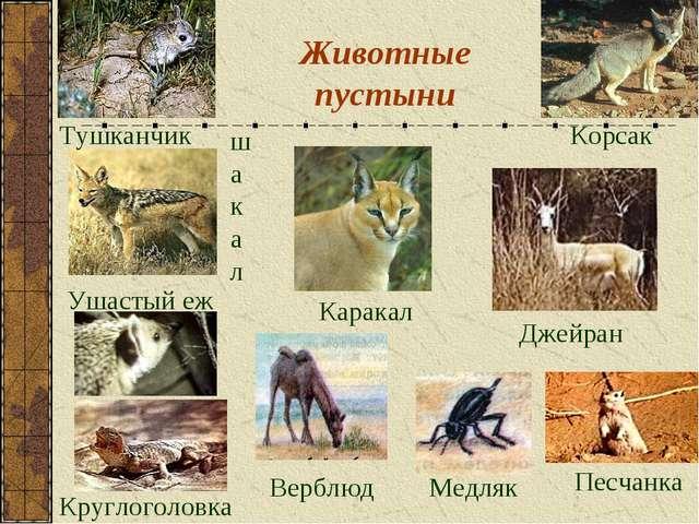 Животные пустыни Каракал Тушканчик Корсак шакал Круглоголовка Джейран Медляк...