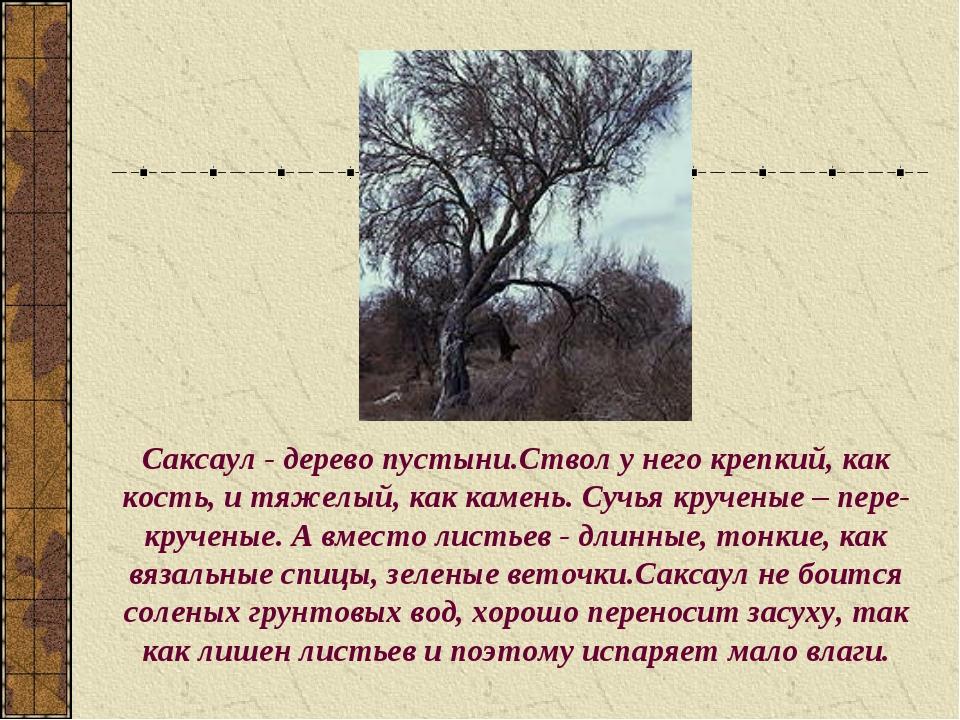 Саксаул - дерево пустыни.Ствол у него крепкий, как кость, и тяжелый, как каме...