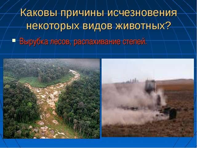 Каковы причины исчезновения некоторых видов животных? Вырубка лесов, распахив...
