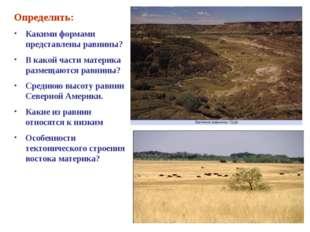 Определить: Какими формами представлены равнины? В какой части материка разме