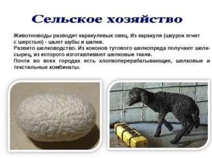 Животноводы разводят каракулевых овец. Из каракуля (шкурок ягнят с шерстью) -