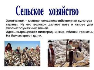 Хлопчатник – главная сельскохозяйственная культура страны. Из его волокон дел