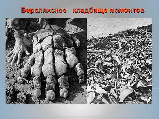 Береляхское кладбище мамонтов