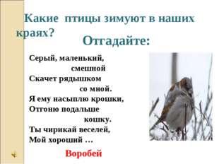 Отгадайте: Какие птицы зимуют в наших краях? Серый, маленький, смешной Скачет