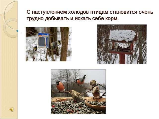 С наступлением холодов птицам становится очень трудно добывать и искать себе...