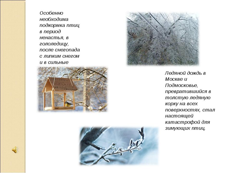 Ледяной дождь в Москве и Подмосковье, превратившийся в толстую ледяную корку...