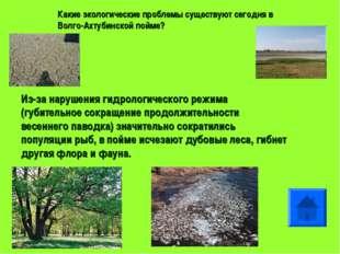 Какие экологические проблемы существуют сегодня в Волго-Ахтубинской пойме? Из