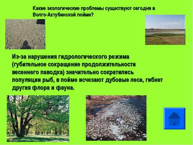 Какие экологические проблемы существуют сегодня в Волго-Ахтубинской пойме? Из...