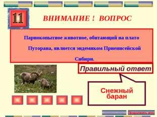 ВНИМАНИЕ ! ВОПРОС Парнокопытное животное, обитающий на плато Путорана, являет